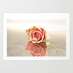 Over Exposed Rose Art Print