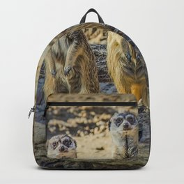 A couple of meerkats Backpack