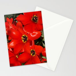 Seductive Red Stationery Cards