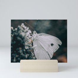 Noir Butterfly. Macro Photography  Mini Art Print
