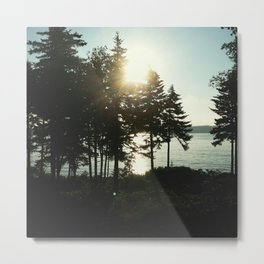maine pines Metal Print