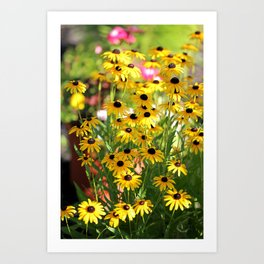 Black Eyed Susans In Shadow Art Print