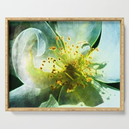 Yellow Rose Center with smokey overlay by CheyAnne Sexton Serving Tray