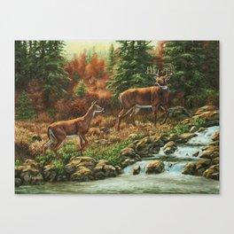 Whitetil Deer Doe & Buck by Waterfall Canvas Print