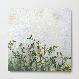 Minimal flora - yellow daisies wild flowers Metal Print