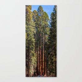 Sequoia Trees Canvas Print