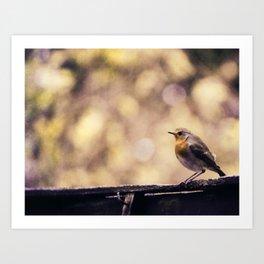 Bird Robin Art Print