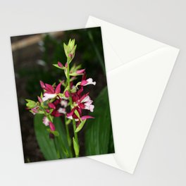 Nun's Orchid Stationery Cards