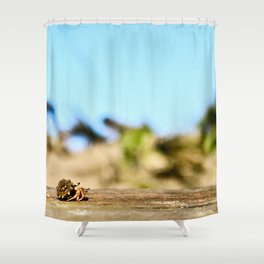 Journey of the Hermit Crab Shower Curtain