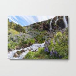 Lupine Landscape Metal Print