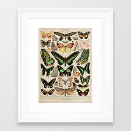 Papillon II Vintage French Butterfly Chart by Adolphe Millot Framed Art Print