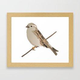 House Sparrow Bird on a Twig Framed Art Print
