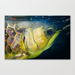 gold-plated Canvas Print