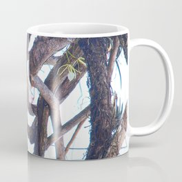Two-toed sloth and orchids in Costa Rica Coffee Mug