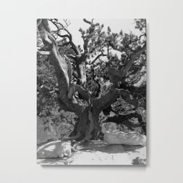 Methuselah Tree Metal Print
