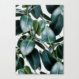 Tropical Elastica Canvas Print