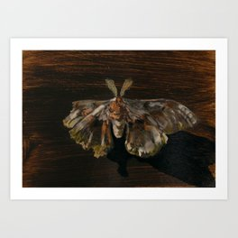 Moth Prophecy Art Print