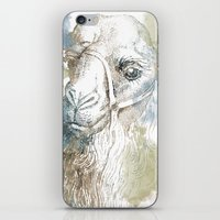 camel iPhone & iPod Skins featuring Camel by Zen and Chic