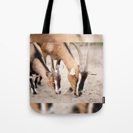 domesticated goats eating from sand Tote Bag
