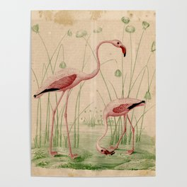 2 Flamingos Poster