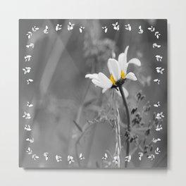 White daisy on a grey day #decor #society6 Metal Print