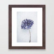Dried Blue Hydrangea Framed Art Print