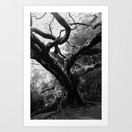The Black Tree Art Print