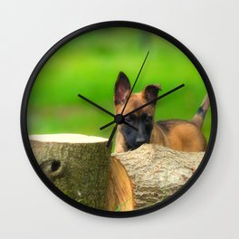 Cute Malinois Dog after the wood Wall Clock
