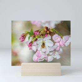 Pink & White Cherry Blossoms Mini Art Print