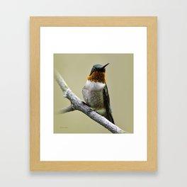 Hummingbird Portrait Framed Art Print