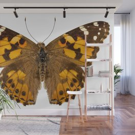 """Butterfly species Vanessa cardui """"Painted Lady"""" Wall Mural"""