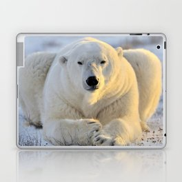 Majestic Giant Adult Polar Ice Bear Sitting On Cold Ground Close Up Ultra HD Laptop & iPad Skin