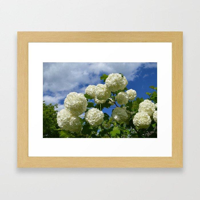 Granny's Snowballs Framed Art Print