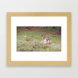 Muley in the Willows Framed Art Print