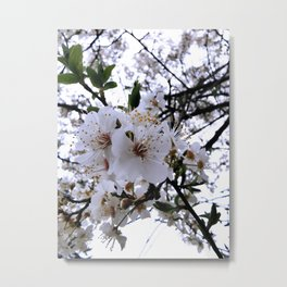 White Cherry Blossom 1 Metal Print