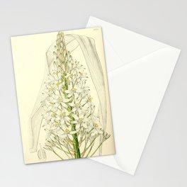 Flower 1978 ornithogalum latifolium Broad leaved Ornithogalum21 Stationery Cards