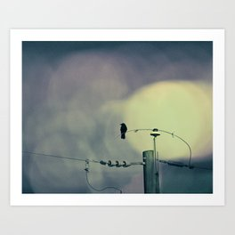 City Crow - Dark Crows Series Art Print