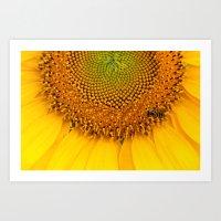 Sunflower #11 Art Print