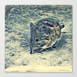elephant shrew (Macroscelididae) Canvas Print