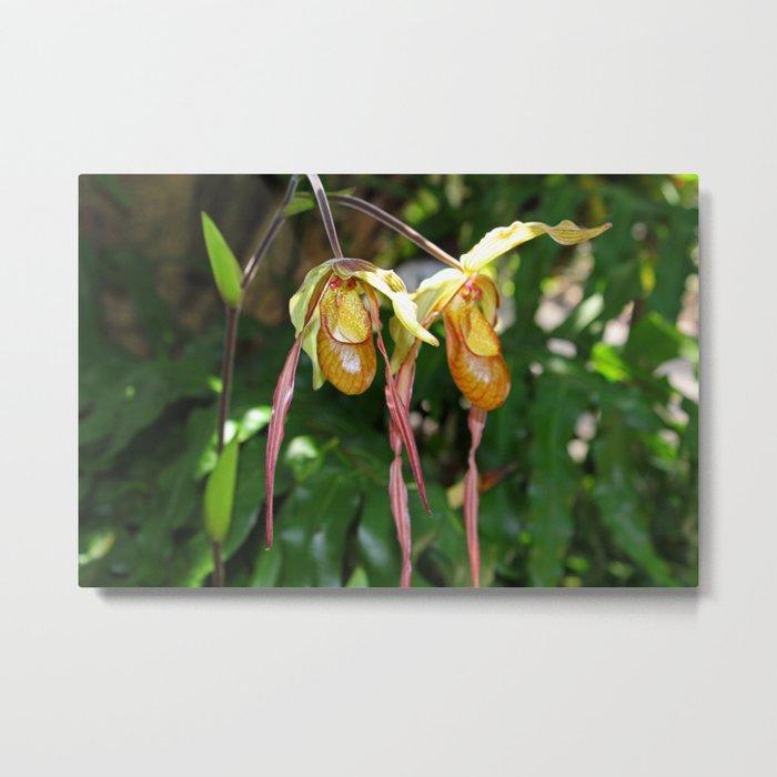 Lady Slipper Orchid I Metal Print