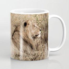 Camouflaged African Male Lions of the Kalahari Desert Coffee Mug