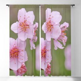 The peach flowers in the rain. Lecrin Valley Blackout Curtain