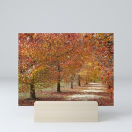 Sun Lit Tree Lined Avenue in Autumn Mini Art Print