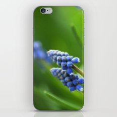 Grape Hyacinths  iPhone Skin