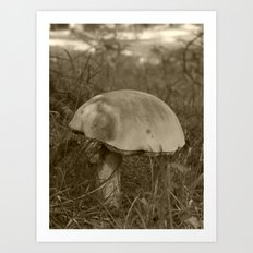 big mushroom 2016 Art Print