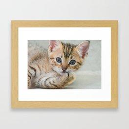 Smirking kitten Framed Art Print