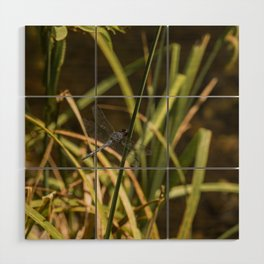 Dragonfly in the marsh Wood Wall Art