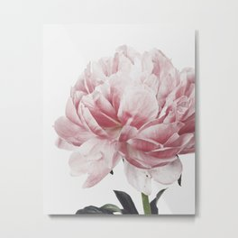Peony, Flower, Pink, Plant, Trendy decor, Interior, Wall art, Photo Metal Print