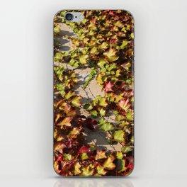 Parthenocissus Tricuspidata iPhone Skin