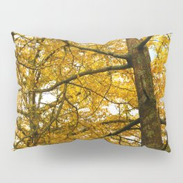 Ginkgo biloba trees Pillow Sham